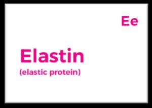 elastin protein